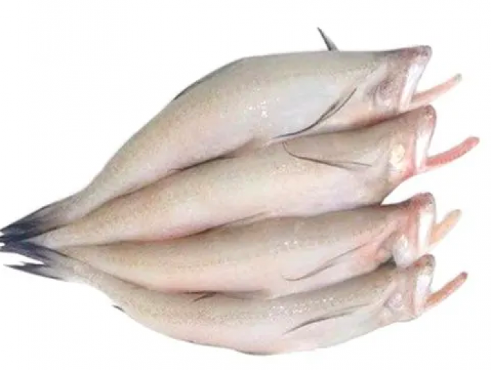 Bombay Duck - লটে মাছ