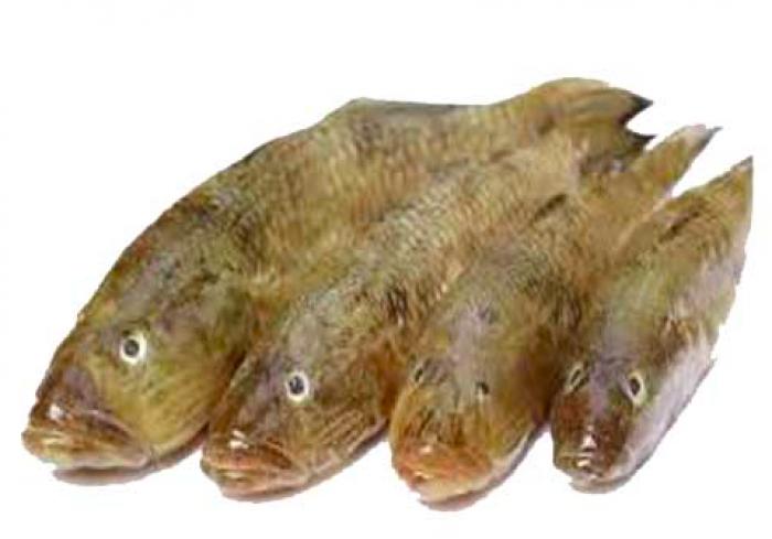 Desi BELE Fish - বেলে মাছ (8-12 COUNTS)