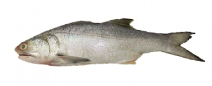 Gurjaoli Fish - গুরজাওলি