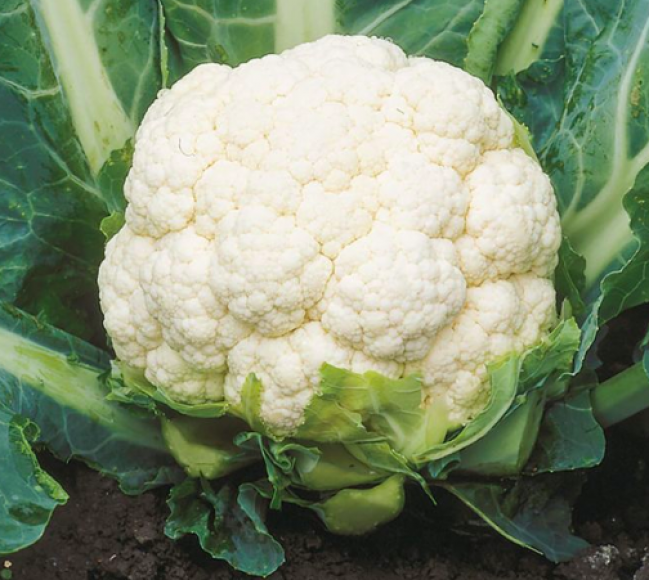 Cauliflower - ফুলকপি