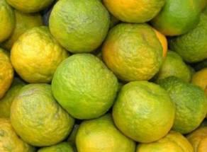 Orange - কমলা লেবু