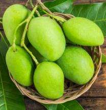 Organic Green Mango - কাঁচা আম