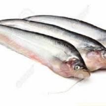 Fresh Pabda Fish - পাবদা  মাছ