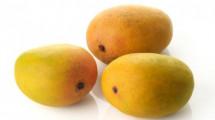 Mango Golapkhas - Madrazi