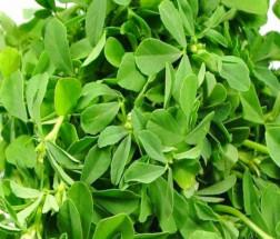 Organic Meethi Shaak - মেথি শাক