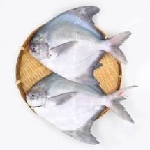Jumbo Pomfret Fish  4 to 5  Counts   - পমফ্রেট মাছ