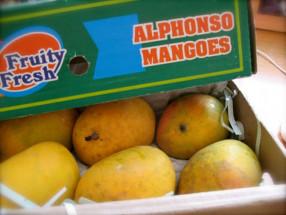 Organic Mango Alphanso 12 Pcs Pack ( Apx 2.2-3Kg)