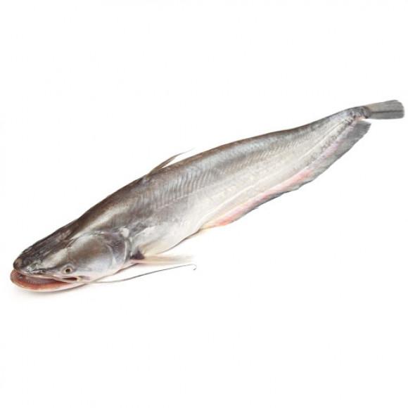 Desi BOAL Fish - বোয়াল মাছ ( 1-2 KG)